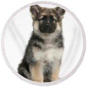 German Shepherd Puppy Round Beach Towel