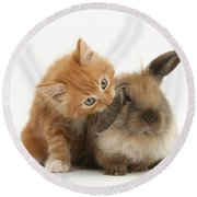Ginger Kitten And Young Lionhead-lop Round Beach Towel