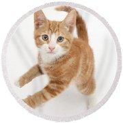 Ginger Kitten Round Beach Towel
