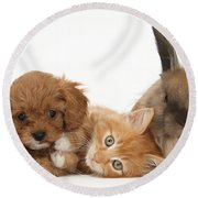 Ginger Kitten With Cavapoo Pup Round Beach Towel