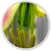 Gloriosa Named Rothschildiana Round Beach Towel