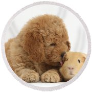 Goldendoodle Puppy And Guinea Pig Round Beach Towel