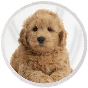 Goldendoodle Puppy Round Beach Towel