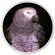 Gray Parrot Round Beach Towel