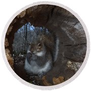 Gray Squirrel Round Beach Towel by Ted Kinsman