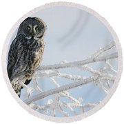 Great Grey Owl, Northern British Round Beach Towel