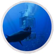 Great White Shark And Divers, Guadalupe Round Beach Towel
