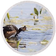 Grebe With Babies Round Beach Towel