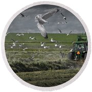 Gull Chased Tractor Round Beach Towel