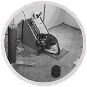 Harlow Monkey Experiment Round Beach Towel by Science Source