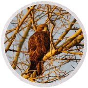 Hawk In A Tree Round Beach Towel