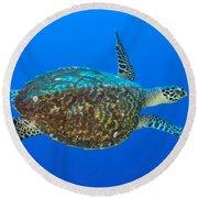 Hawksbill Sea Turtle, Kimbe Bay, Papua Round Beach Towel