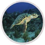 Hawksbill Turtle On Caribbean Reef Round Beach Towel