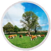 Hereford Bullocks Round Beach Towel