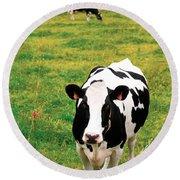 Holstein Dairy Cattle Round Beach Towel