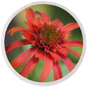 Hot Papaya Coneflower Squared Round Beach Towel