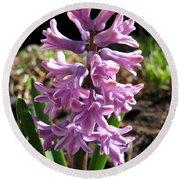 Hyacinth Named Splendid Cornelia Round Beach Towel