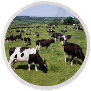 Ireland Friesian Cattle Round Beach Towel