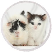 Kitten And Guinea Pig Round Beach Towel