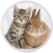 Kitten And Netherland Dwarf-cross Rabbit Round Beach Towel
