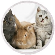 Kitten And Rabbit Round Beach Towel