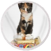 Kitten On Packages Round Beach Towel