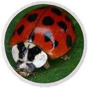 Ladybird Beetle Round Beach Towel