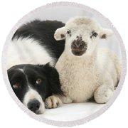 Lamb And Border Collie Round Beach Towel