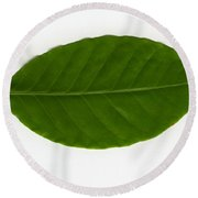 Leaf Of A Coffee Plant Coffea Sp Round Beach Towel