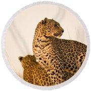 Leopard Panthera Pardus, Arathusa Round Beach Towel