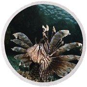 Lionfish, Indonesia Round Beach Towel
