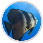 Longfin Spadefish, Papua New Guinea Round Beach Towel