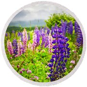Lupins In Newfoundland Meadow Round Beach Towel