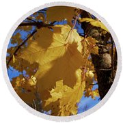 Maple In Fall Round Beach Towel