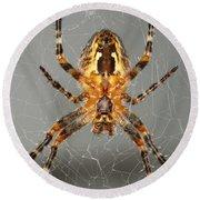 Marbled Orb Weaver Spider Round Beach Towel