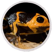 Mimic Poison Frog Round Beach Towel