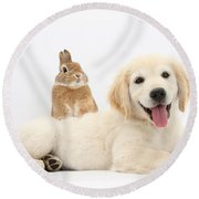 Netherland-cross Rabbit And Golden Round Beach Towel
