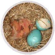 Newborn Robin Nestlings Round Beach Towel