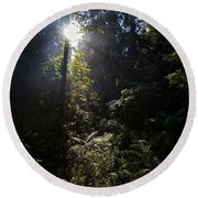 Old Forests At Evo Round Beach Towel