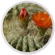 Orange Cactus Flower Round Beach Towel