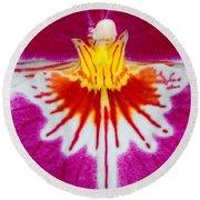 Orchid Closeup Round Beach Towel
