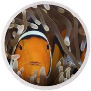 Percula Clownfish In Its Host Anemone Round Beach Towel