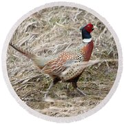 Pheasant Walking Round Beach Towel