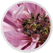 Pink Anemone From The St Brigid Mix Round Beach Towel