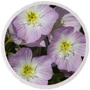 Pink Evening Primrose Wildflowers Round Beach Towel