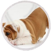 Playful Bulldog Pup Round Beach Towel