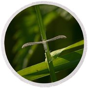 Plume Moth Round Beach Towel