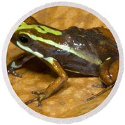 Poison Frog With Eggs Round Beach Towel