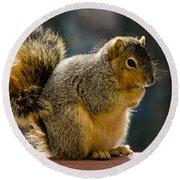 Praying Squirrel  Round Beach Towel