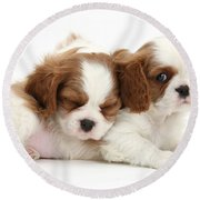 Puppies Round Beach Towel
